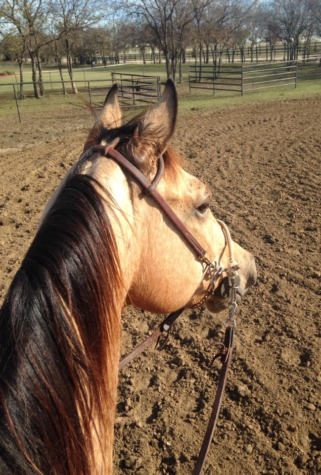 Photo Courtesy: Windy Griffith,  Rebel Barrel Horses