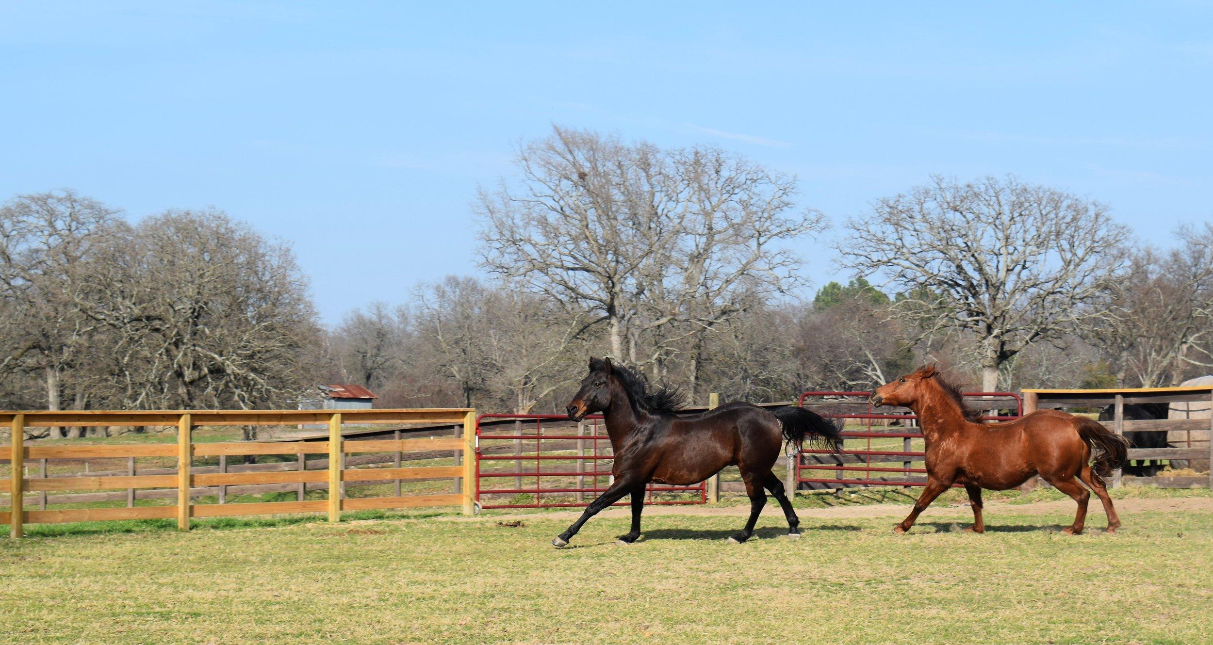 horses running 2.jpg