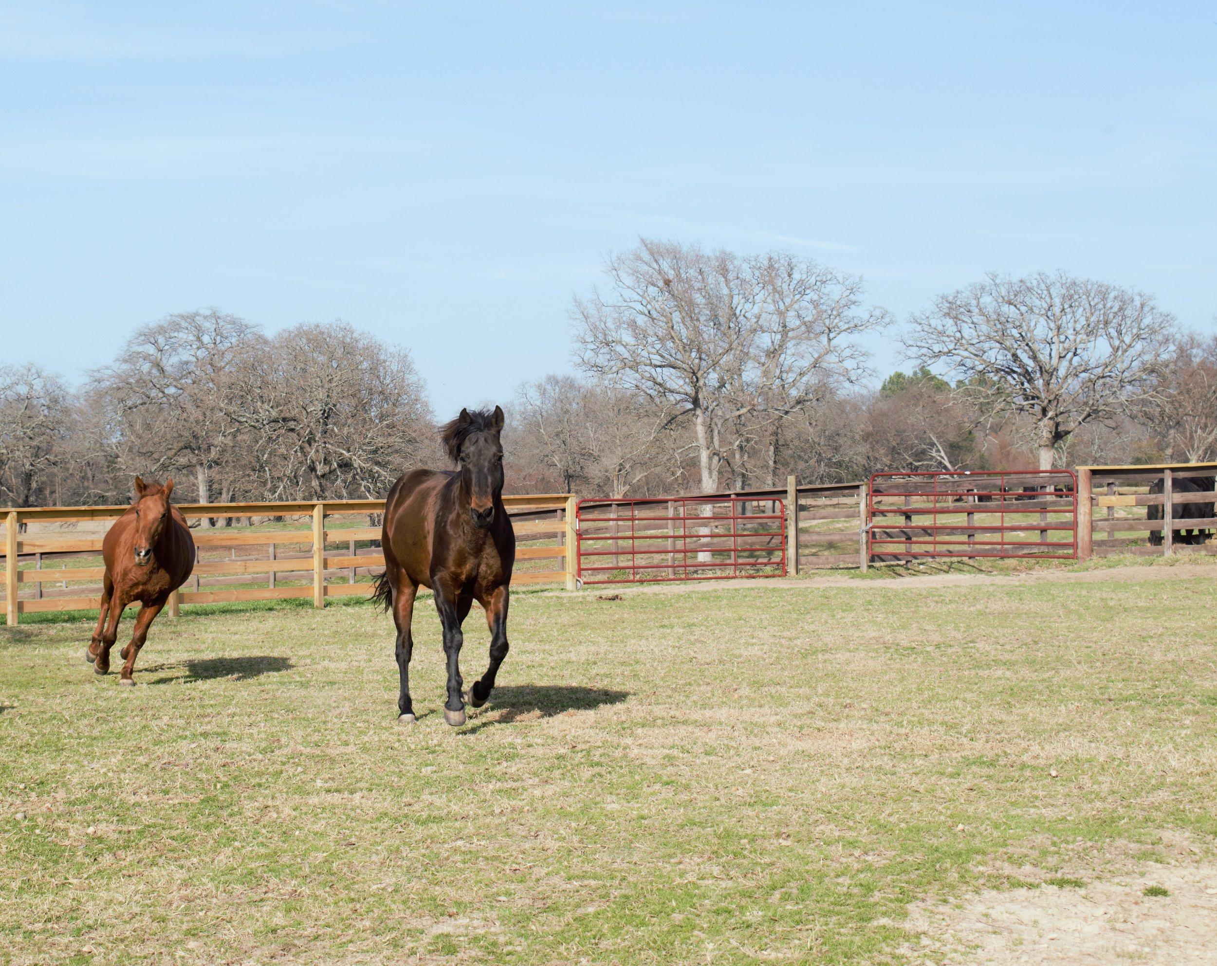 horses running 3.jpg