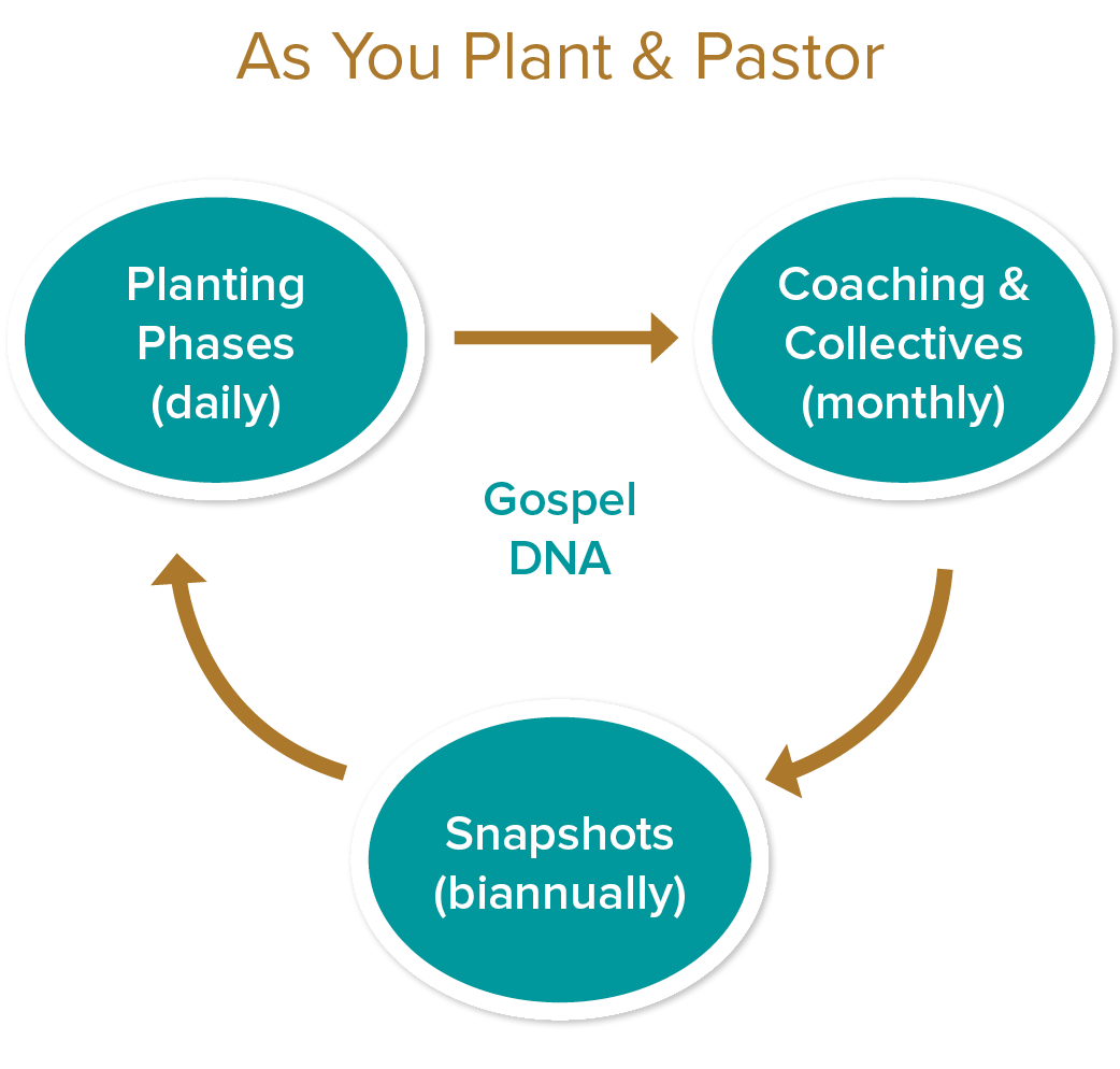 """as you plant & pastor  Gospel dna  - you did a gospel dna design for your planting context. now you're implementing in tangible ways with real people. Jesus and the gospel is the center out of which everything you do flows. we remind you of this and walk with your through each phase of planting.   planting phases  - Our tracking tool will help you answer""""when do I do what?"""" wrong timing and unrealistic expectations can discourage and derail you. we will help you with a time-tested sequence of milestones to reach during the """"birthing...adolescence...maturing & multiplying"""" phases of planting.   Coaching & collectives  - YOU WILL RECEIVE TOOLS FOR you and your COACH TO USE TOGETHER TO REACH IMPORTANT GOALS you set for yourself. monthly COLLECTIVES with your PEER group of other planters and pastors provides regular encouragement for your mission. """"Just-in-time training"""" is also available through sent when you need to improve as a leader.   snapshots  - As your LABOR tO PLANT & PASTOR, IT'S GOOD TO STEP BACK periodically and TAKE A """"SNAPSHOT"""" of your work with your church. this provides reasons to CELEBRATE. It also surfaces areas to IMPROVE. THIS TOOL HELPS YOU DO THIS through the lens of the gospel DNA. We will continue to coach and walk with you as you set fresh goals to pursue for the advance of the gospel and your church."""