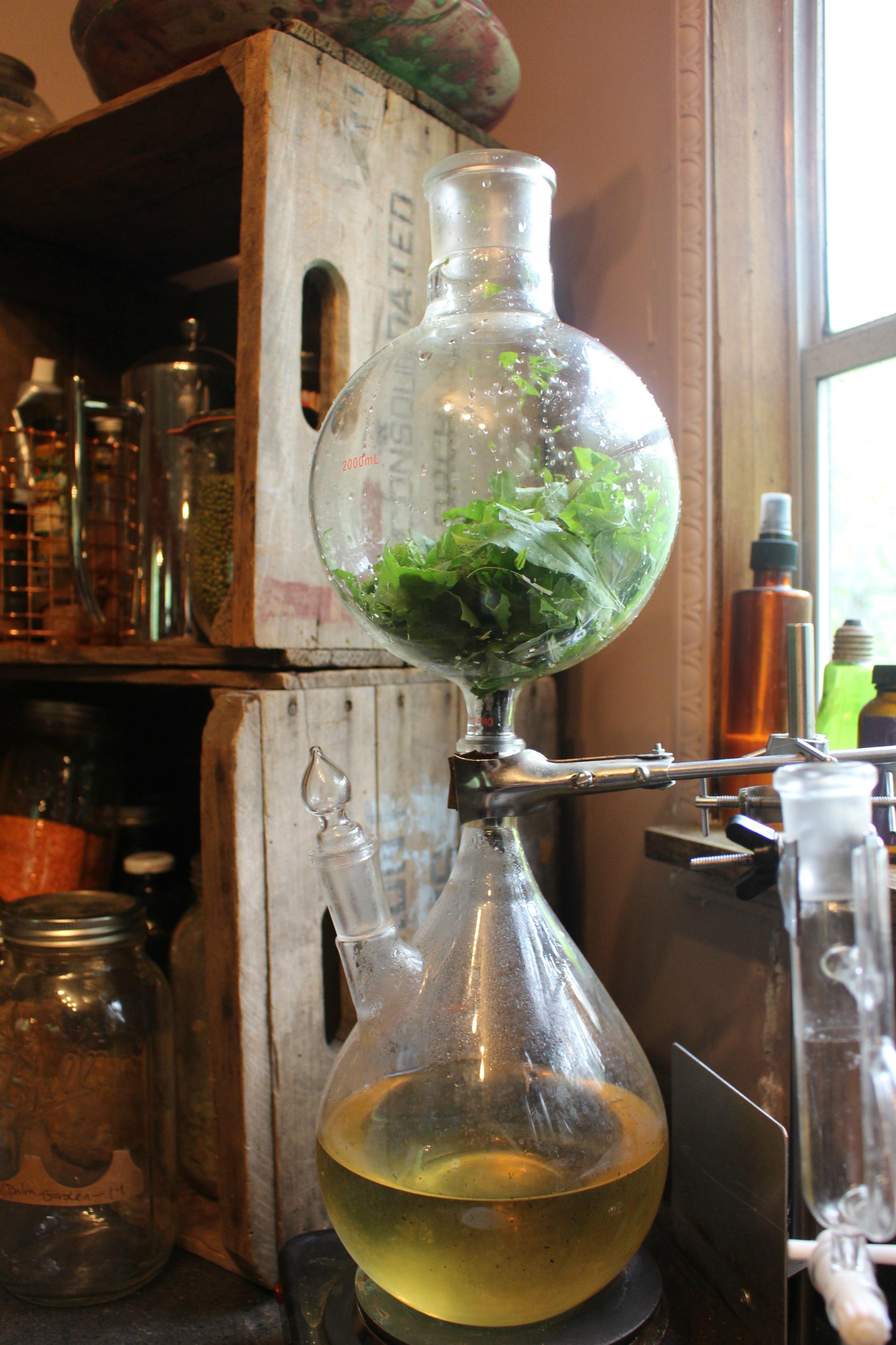 A Steam Distiller filled with plantain leaf