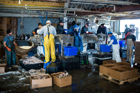 Managing the fish house floor includes making sure seafood is at proper temperatures. Photo by Daniel Pullen.