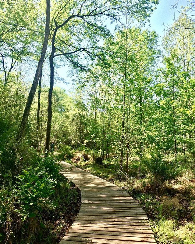 Beautiful day at the Brumley Nature Reserve with @trianglelandconservancy. Happy #EarthDay!