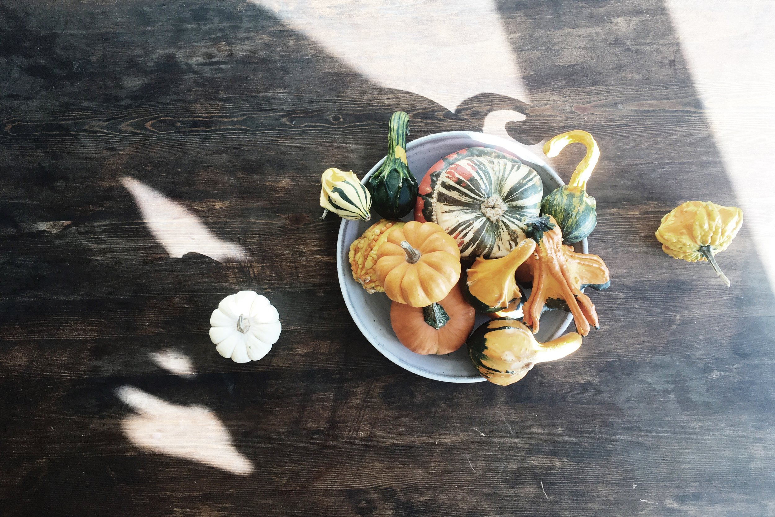 gourd downey.JPG