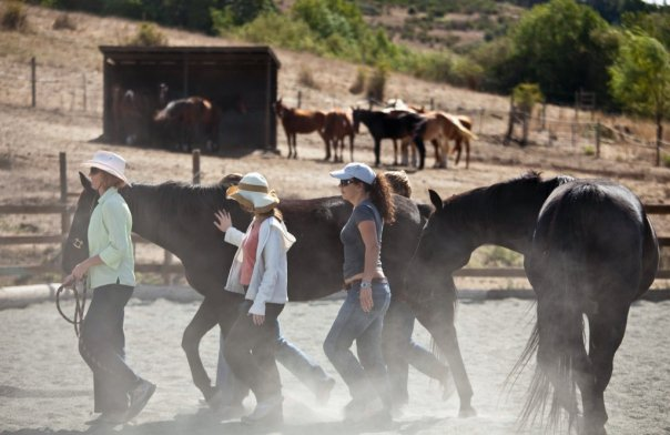 Group with horses.jpg