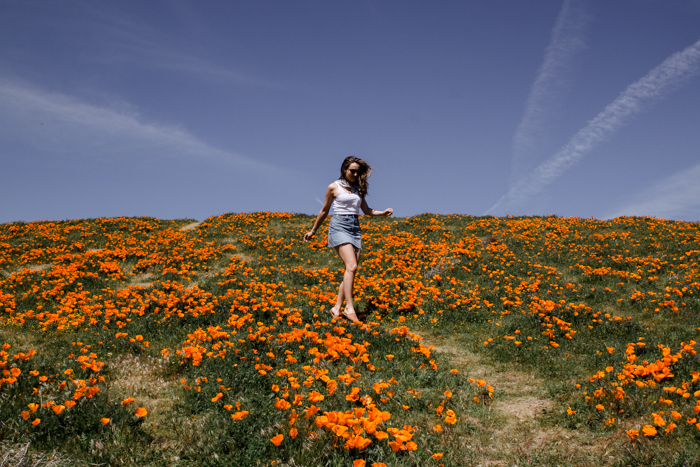 POPPY RESERVE LOS ANGELES