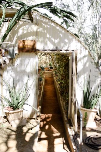 The World's First Cactarium Palm Springs