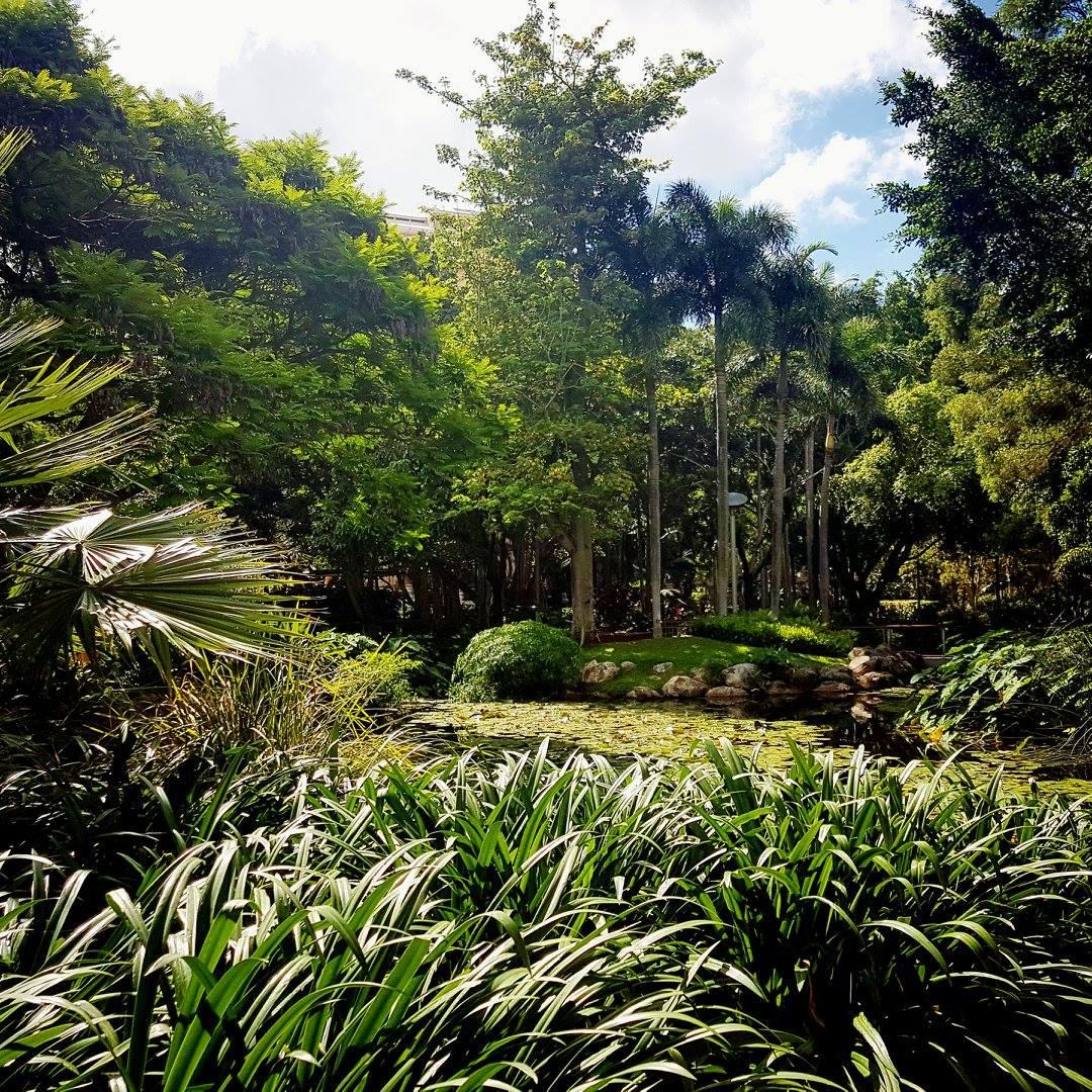 BrisVegas rainforest