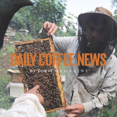 dailycoffeenews.jpg