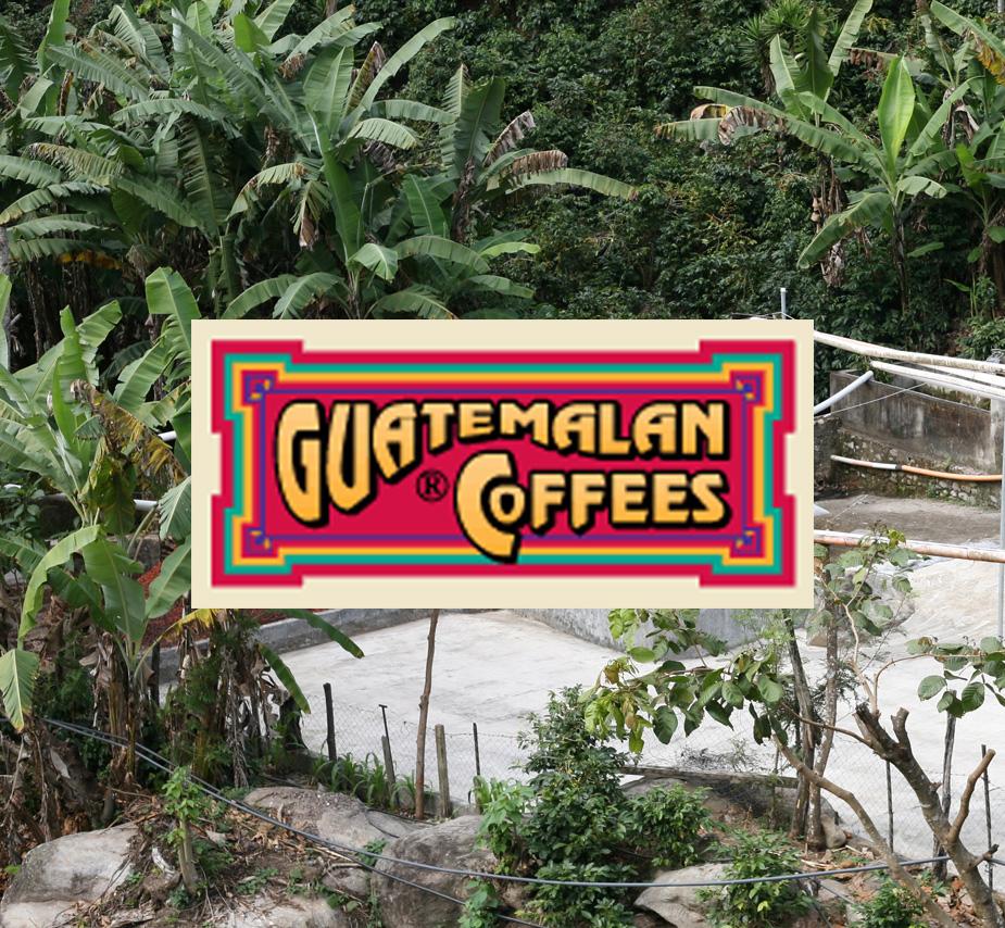 guatemalancoffees.jpg