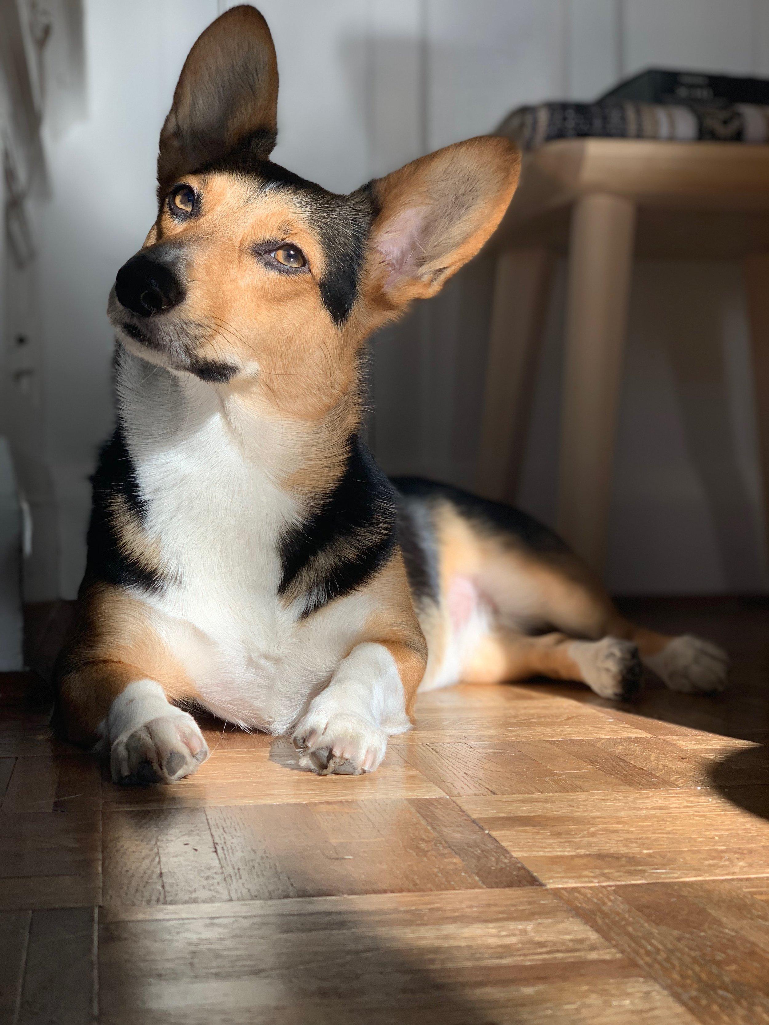 P I P - enjoying a sunbeam