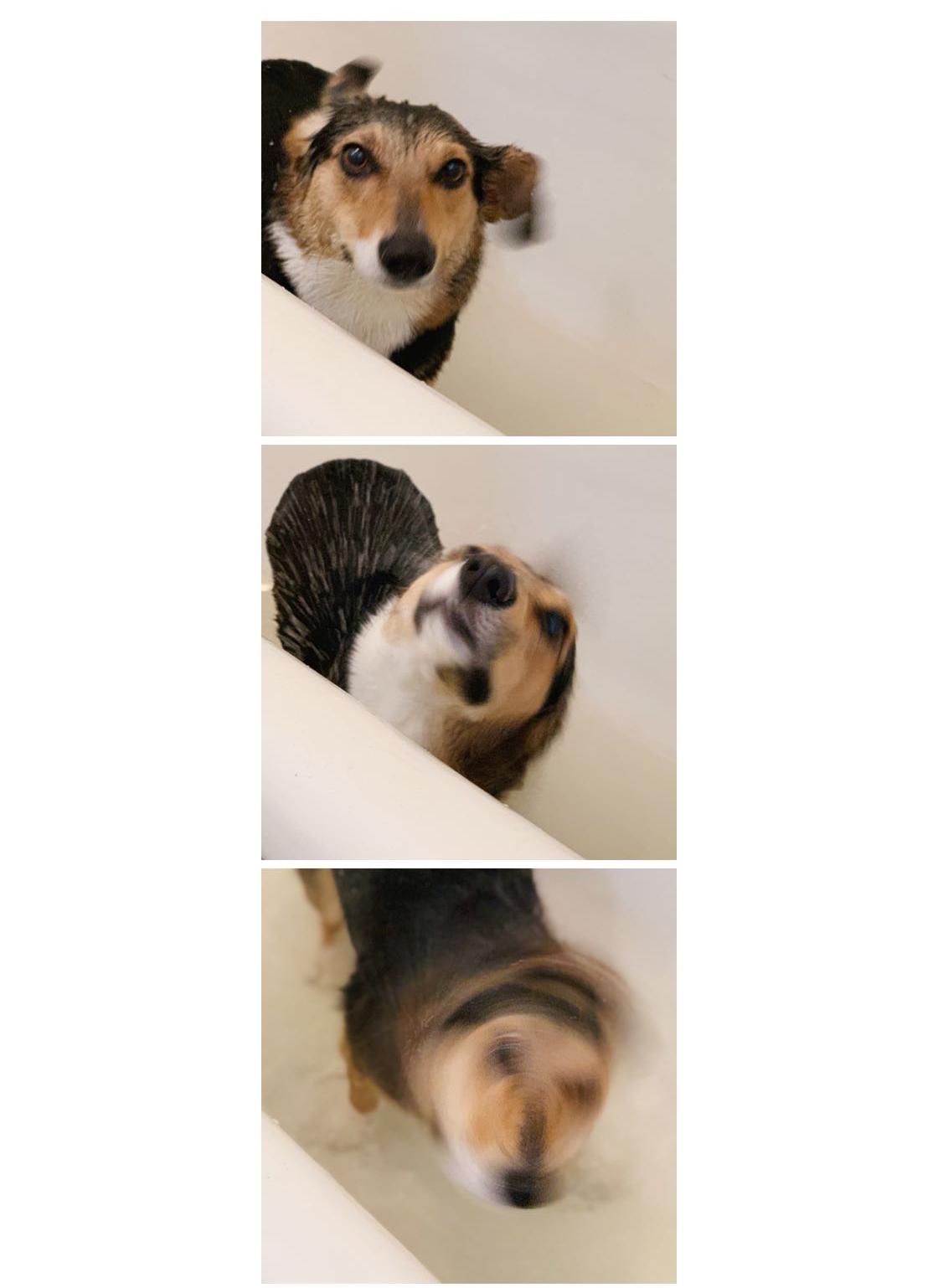 P I P - getting a bath