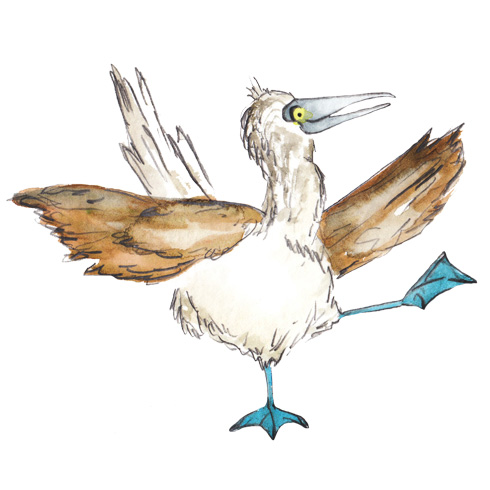 Blue-Footed_Booby.jpg