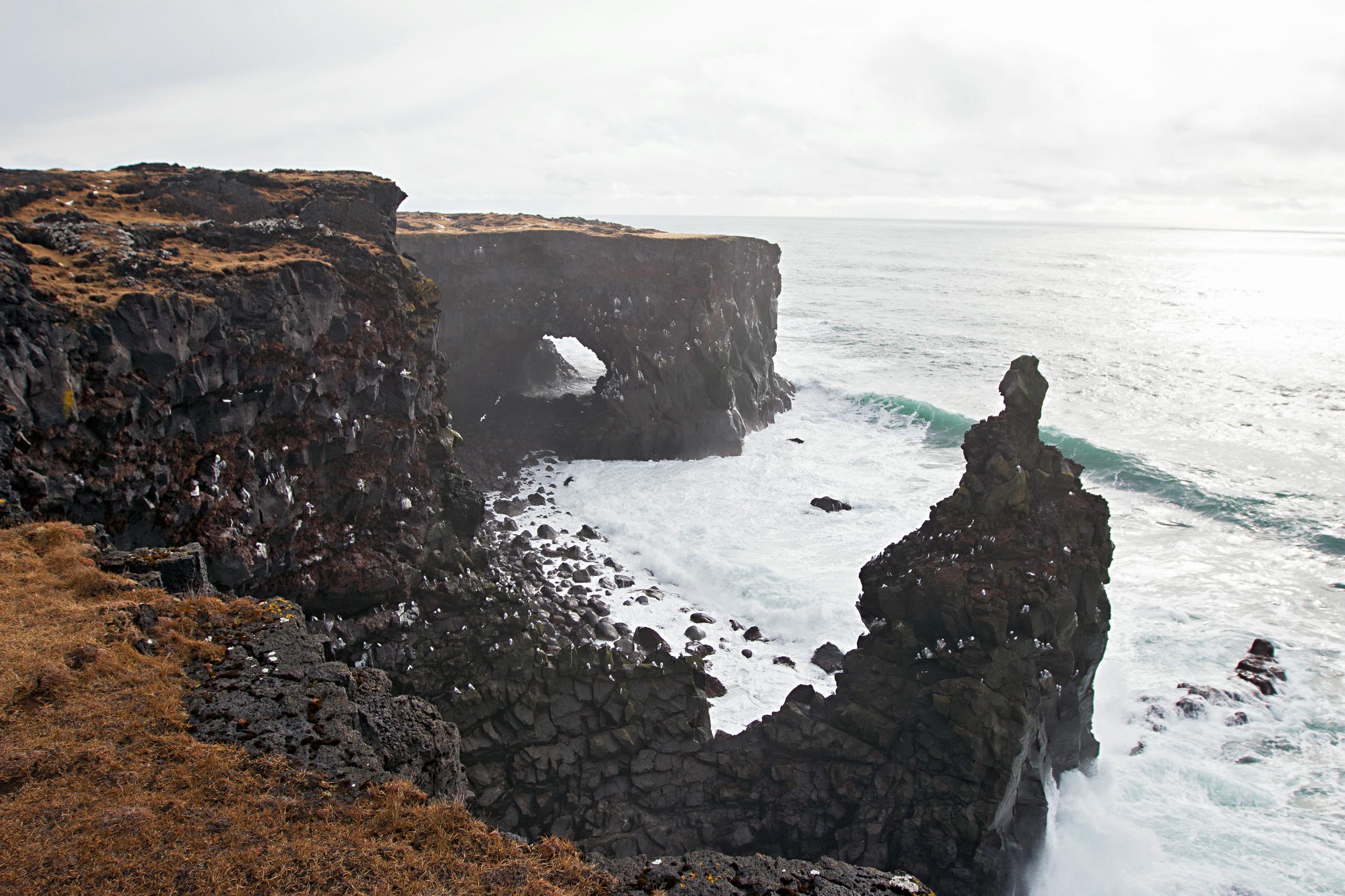Svörtuloft bird cliffs at Öndverðarnes