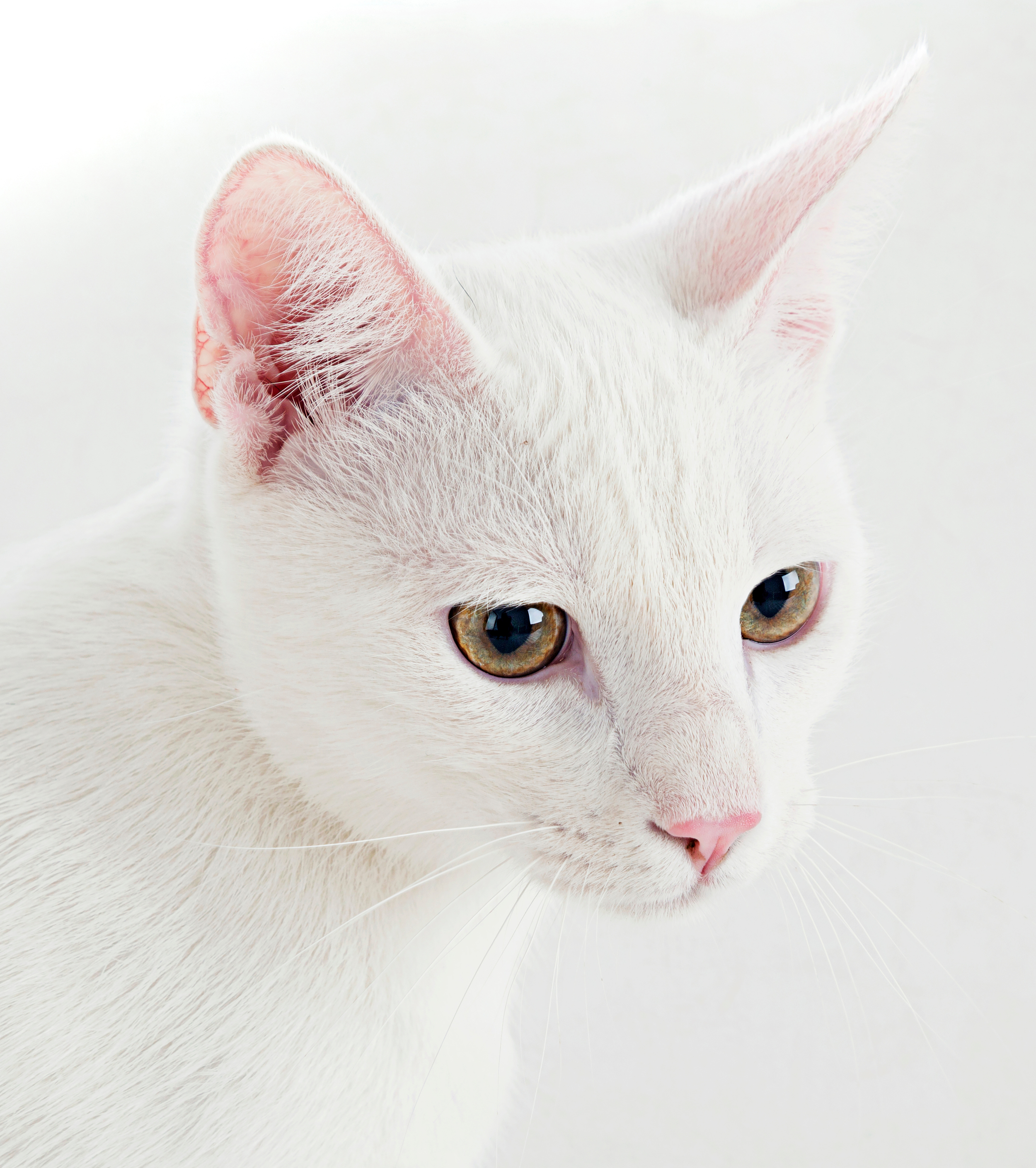 white cat1_edited-1.jpg