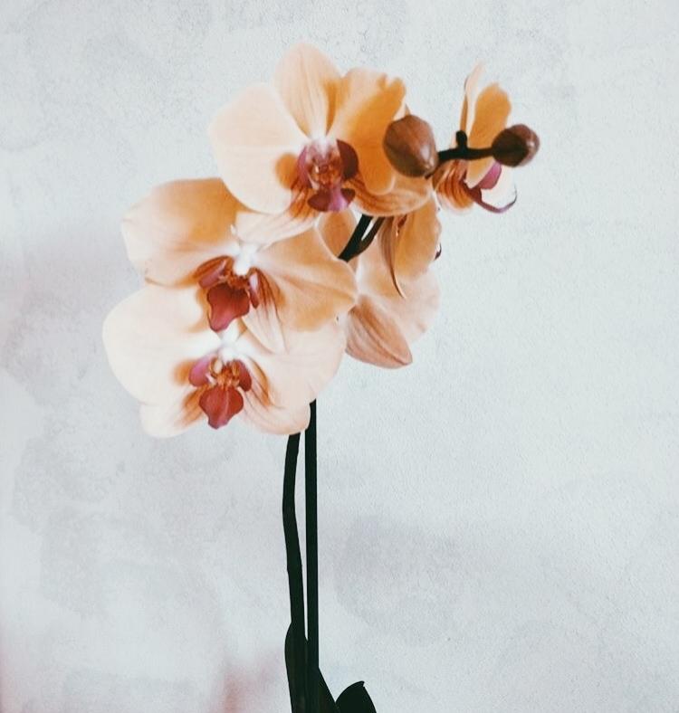 redlandinternationalorchidshow.jpg