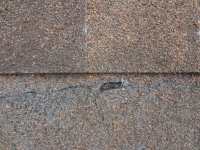 Damaged shingles with significant granular loss