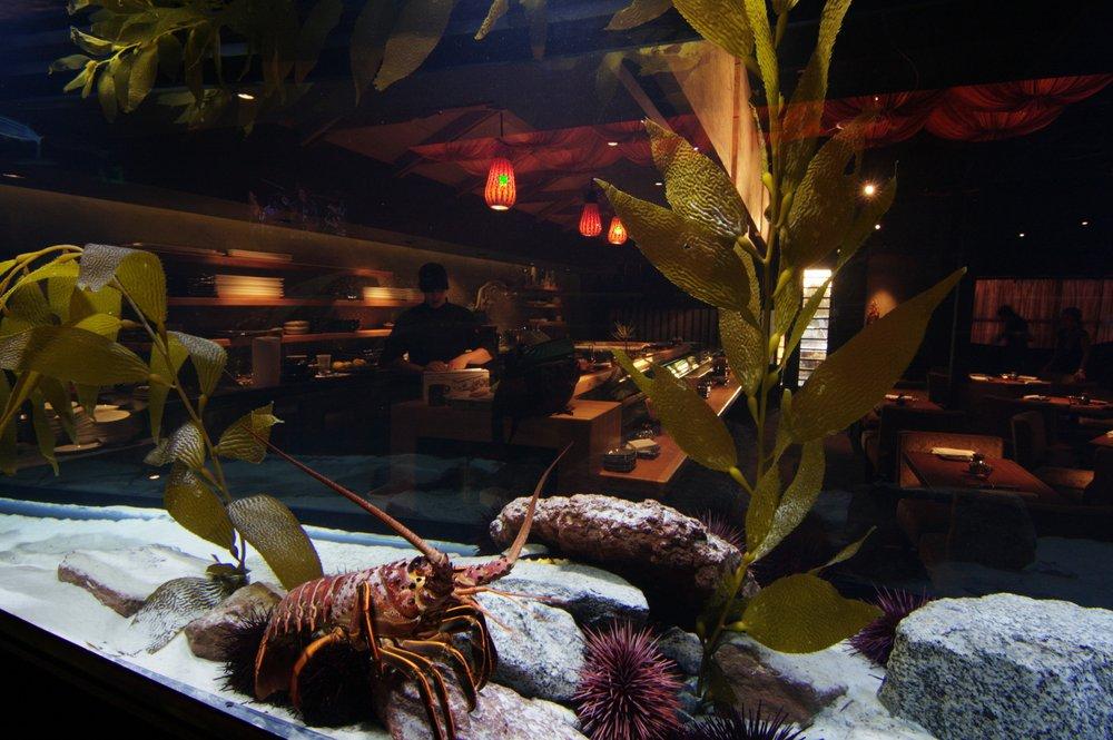 Senbu Sushi Bar, Restaurant & Cocktails - Lobster.jpg