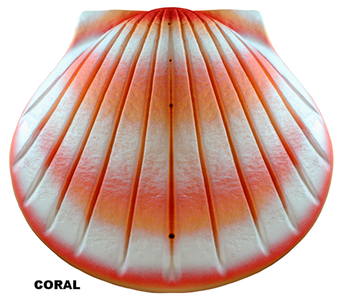 Shell_Coral_slide.png