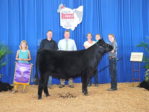 TJ Miss Rachel 138Y Champion Owned  Percentage Simmental Heifer   2012 AJSA National Classic