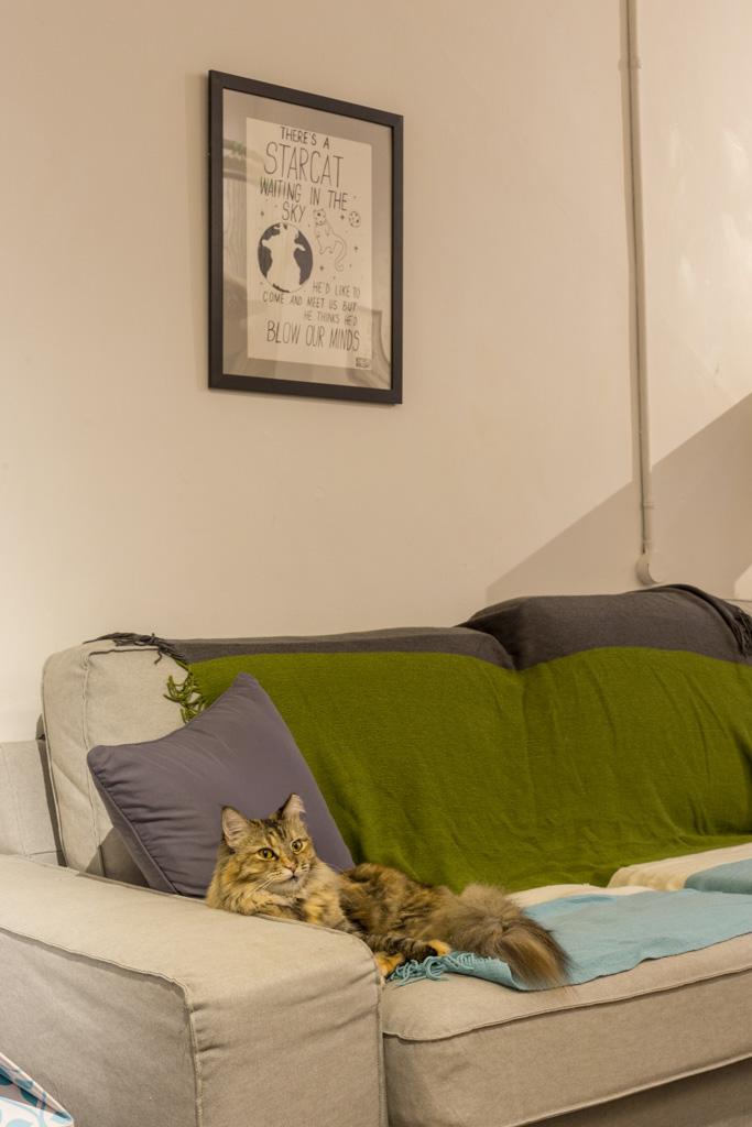 The Company Of Cats - 15.jpg