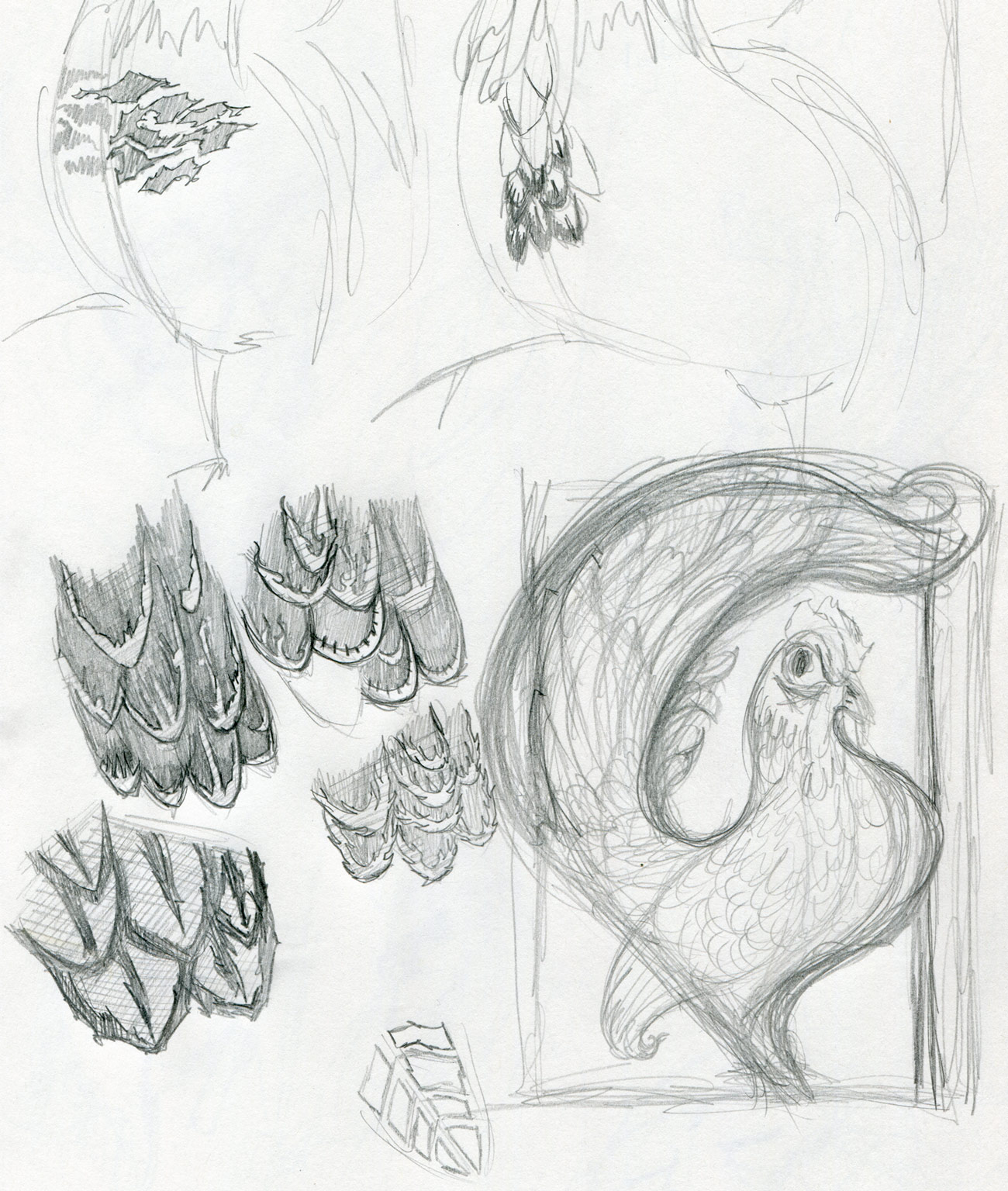 Sketches • feather patterns
