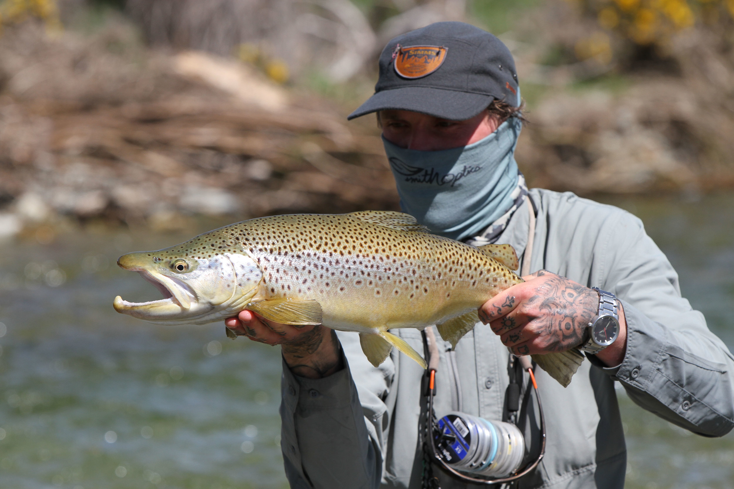 DRY FLY EATER FROM A SKINNY WATER