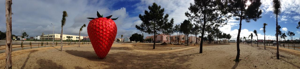 02-02-2015 12:07:39  Pinhal Negreiros, Azeitão, Portugal