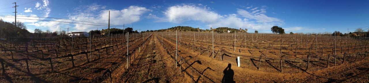 10-01-2015 15:26:18  Montemor-o-Novo, Alentejo, Portugal
