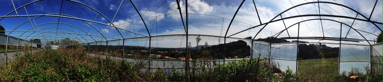 30-09-2014 12:31:54  Colares, Sintra, Portugal