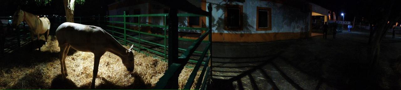07-09-2014 22:16:58  Feira da Luz, Montemor-o-Novo, Portugal