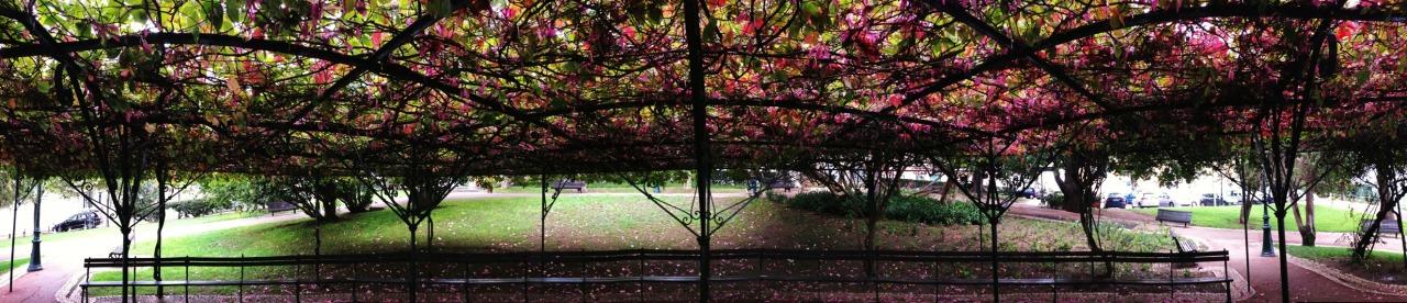 21-10-2013 12:21:40  Jardim 9 de Abril, Lisbon,Portugal