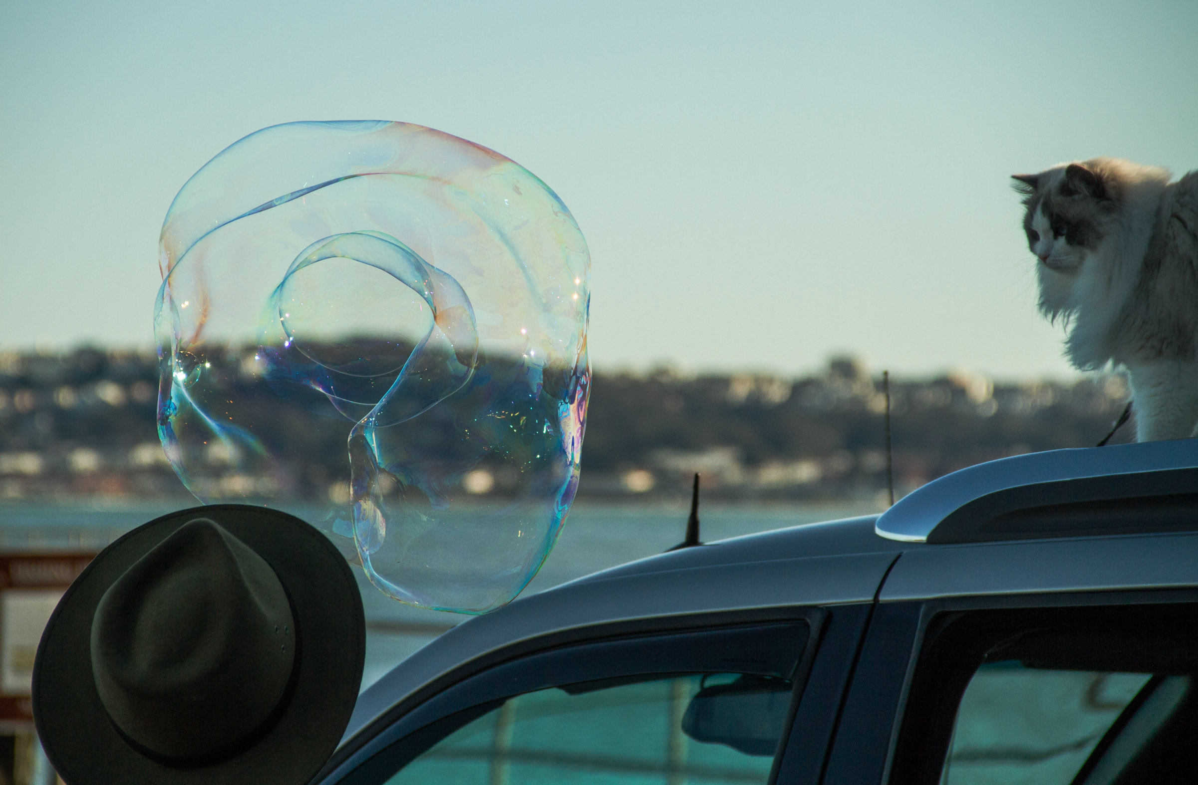 bubble guy with cat at horseshoe bay.jpg
