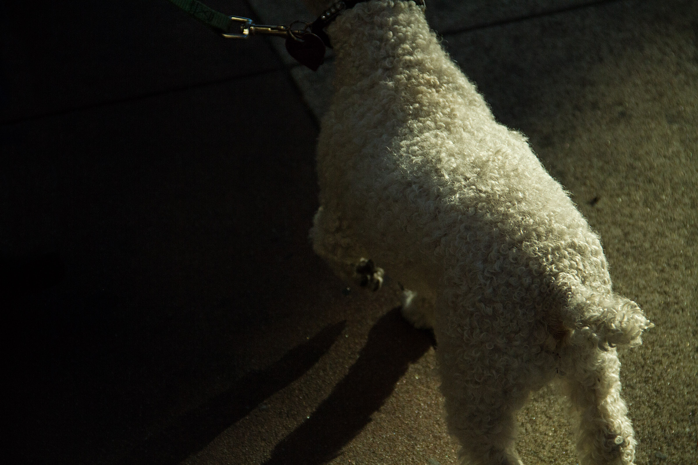 furry buddy in the mission sf.jpg