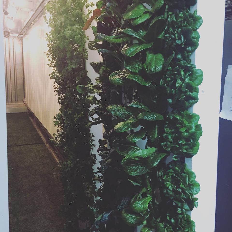 hydroponic greens.jpg