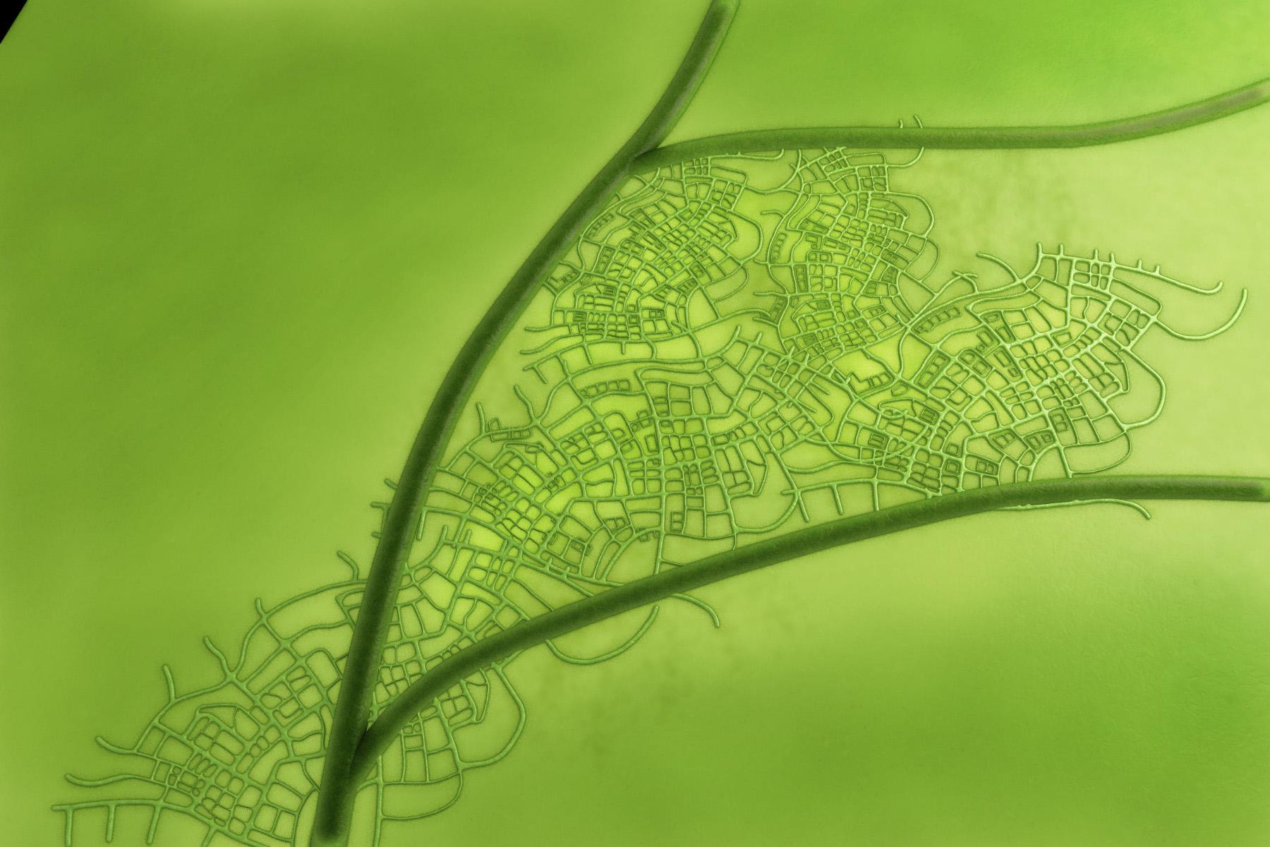 green leaf test3.jpg