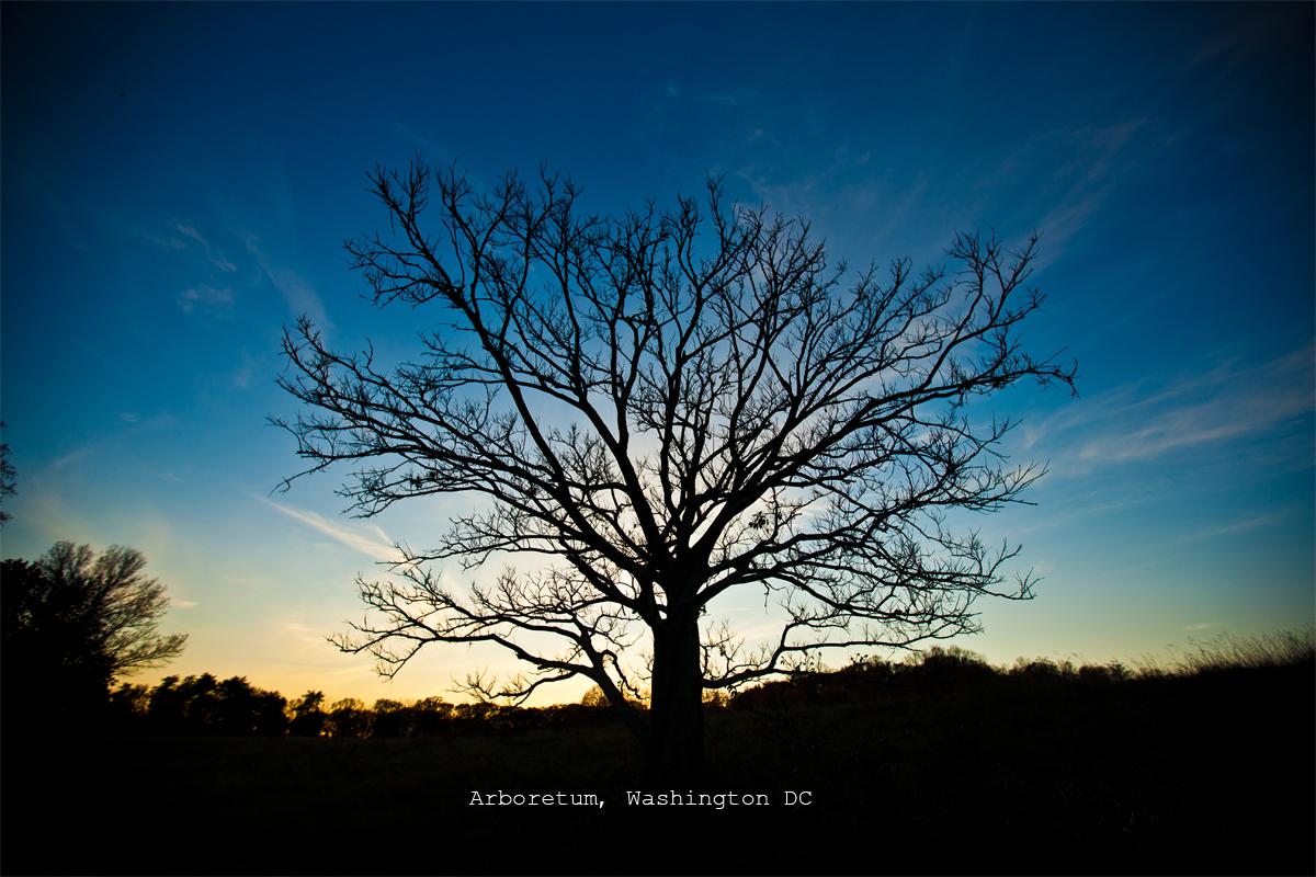 DC2012_NightPhotos-5578card.jpg