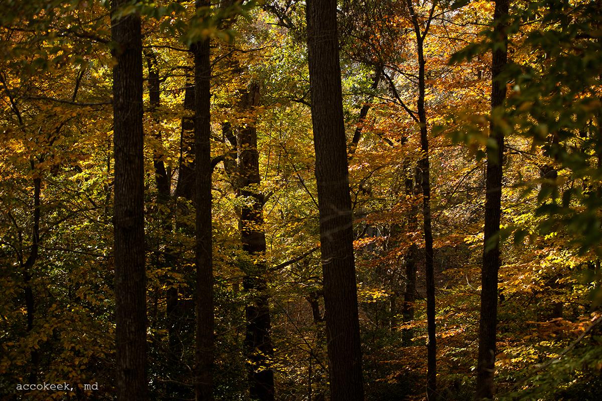 accokeek forest.jpg