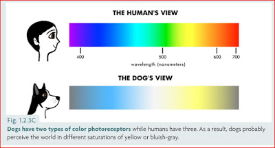 Dog-Cognition-Canine-Colour-Spectrum-versus-Human-Graph.jpg