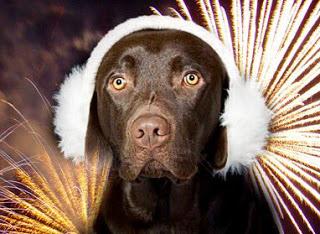 Fireworks_Night_Twitter.jpg