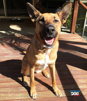 Dog-Cognition-Aramis-expresses-Contentment.jpg