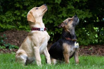 Training-Fun-Tricks-To-Teach-Your-Dog.jpg