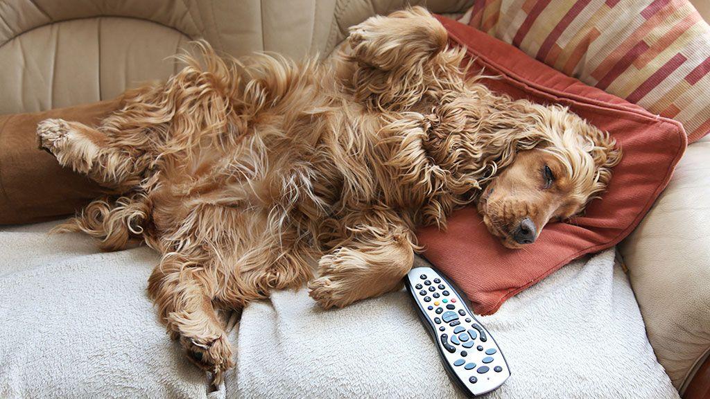 sleepy dog.jpg
