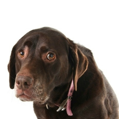 Fear Periods     Ian Shivers of Bondi Behaviourist   It is normal for most puppies to go through a 'Fear Period'. The first fear imprint period generally occurs between 8-11 weeks. Between 6-14 months there can be further periodic fear periods which are also normal.