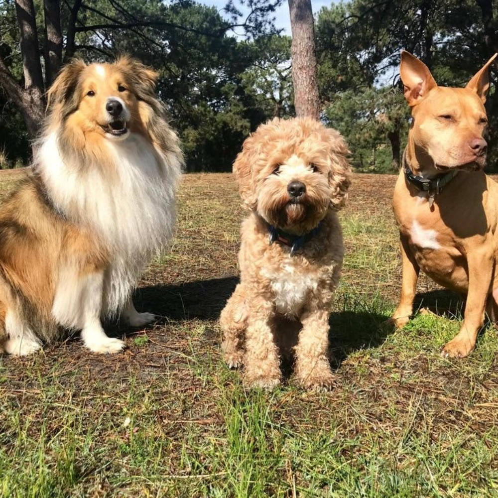 Dog Park Etiquette     Ian Shivers of Bondi Behaviourist   Often tricky to get right for everyone but we believe that manners and respect of others are most important