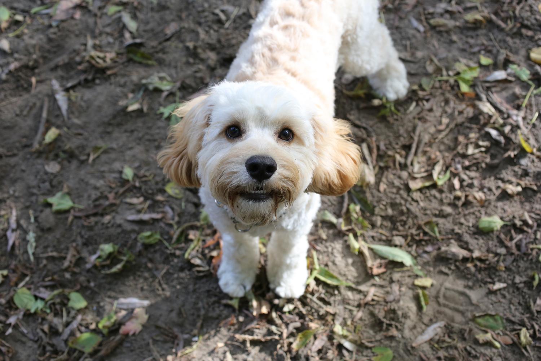 waggingwithchantal-puppy.jpg