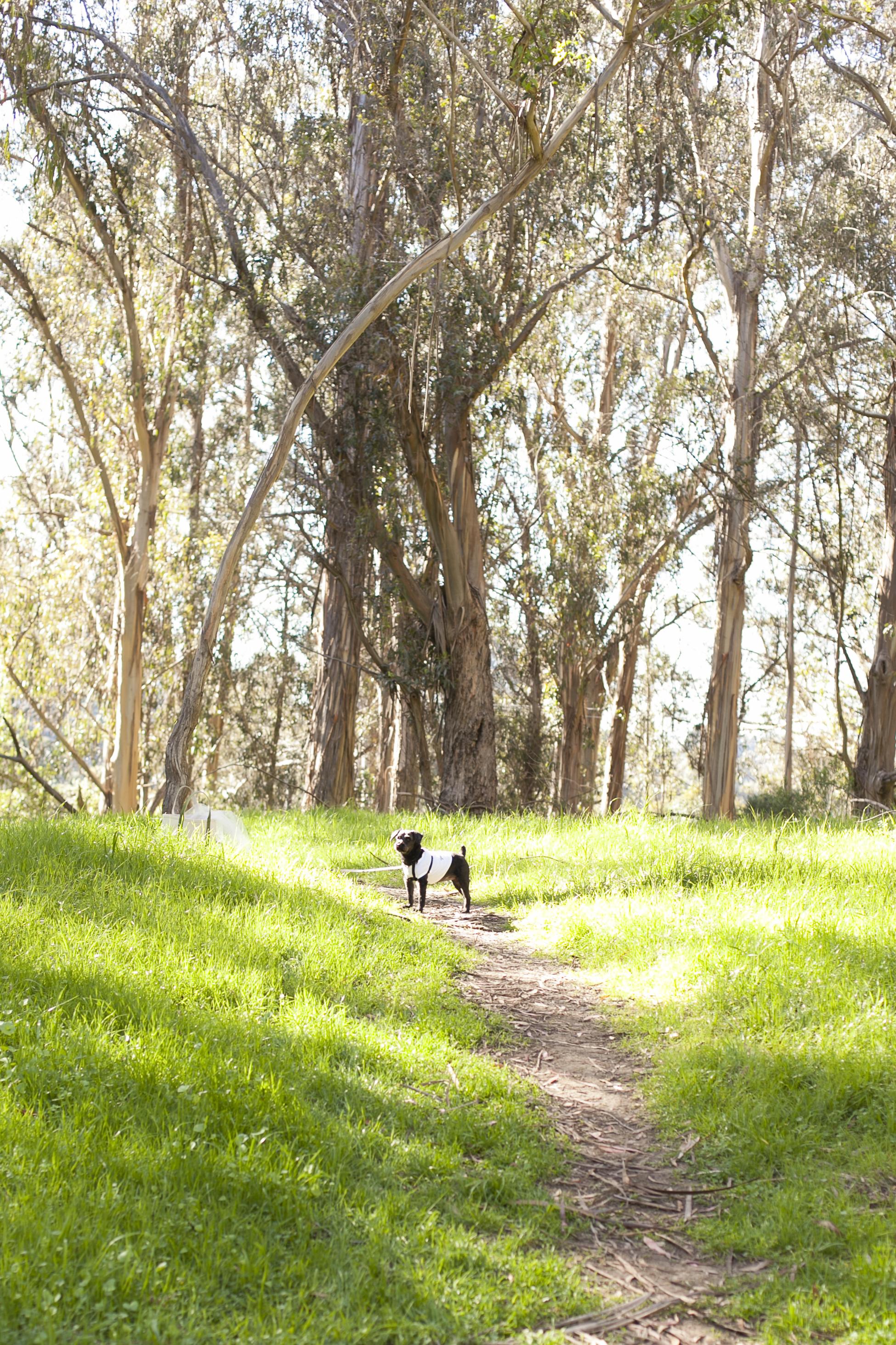 Tilden Park Berkeley Wedding Photographer-Meo Baaklini065.jpg