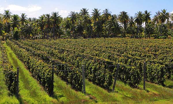 Wine & Rum Tasting -