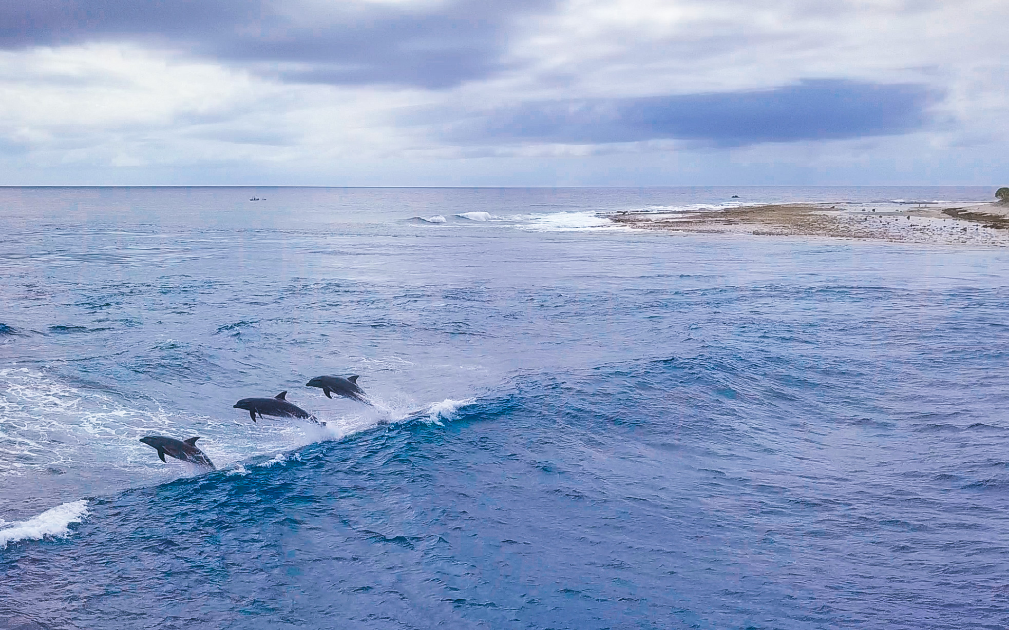 Watch the Dolphins play -