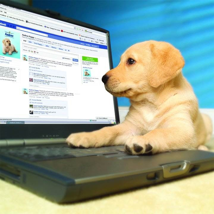 If you need more convincing on the value of social media engagement, Richmond's puppy tough love should do the trick.